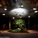 The Lowline in NYC